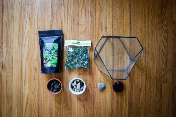 Terrarium Kit DIY 1